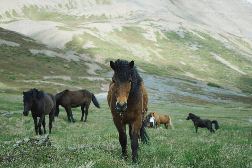cavalnet les amis des chevaux:  agenda des manifestations équestres tels que rallyes et petites annonces