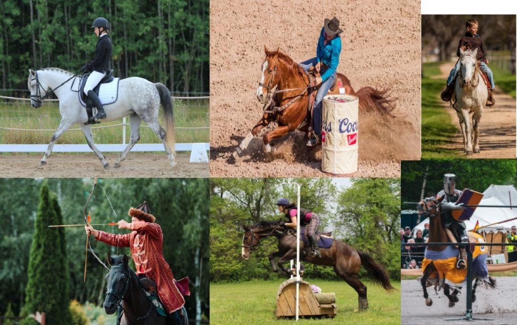 Mosaique photos dressage, saut d'obstacle, rallye, jeux équestres, western, randonnée